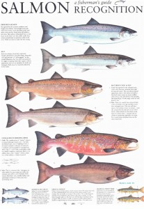 Salmon Recognition Chart courtesy of Robin Ade